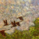 Geese in Flight - Kris Taylor Art